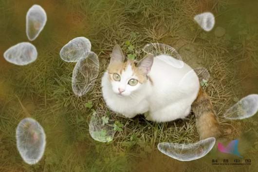 养猫或致精神分裂?草莓掉色是染色了?3月谣言逐个灭