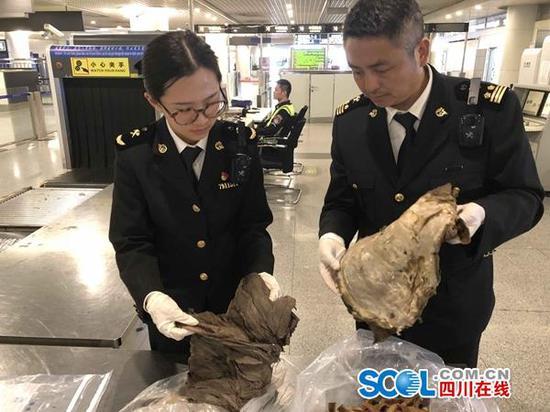 旅客从尼泊尔带回一箱牛毛肚 遭成都海关截获