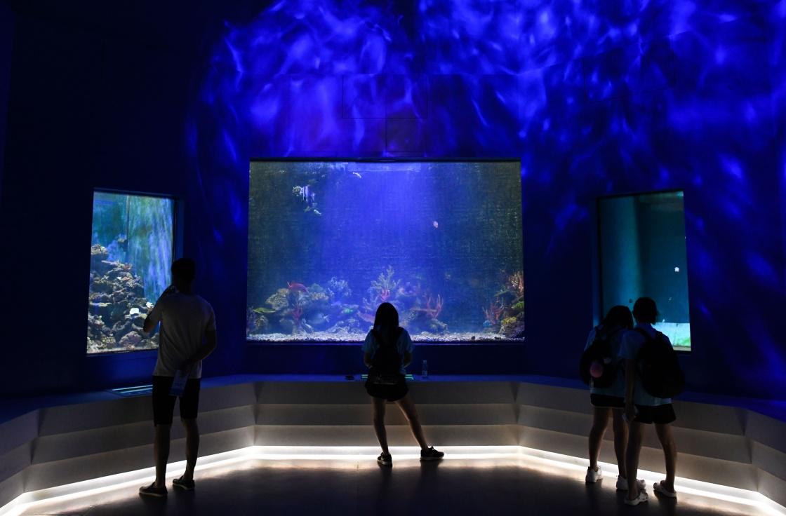 探秘海洋文化 乐享暑期生活
