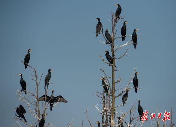 湿地保护得好不好,主要是看鸟